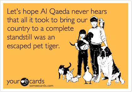 Let's hope Al Qaeda never hears that all it took to bring our country to a complete standstill was an escaped pet tiger.