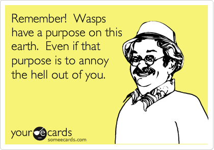 Remember!  Wasps have a purpose on this earth.  Even if that purpose is to annoy the hell out of you.