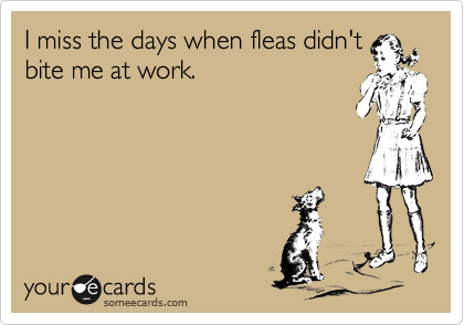 I miss the days when fleas didn't bite me at work.