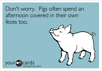Don't worry.  Pigs often spend an afternoon covered in their own feces too.