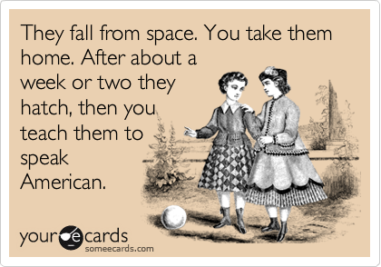 They fall from space. You take them home. After about a week or two they hatch, then you teach them to  speak American.