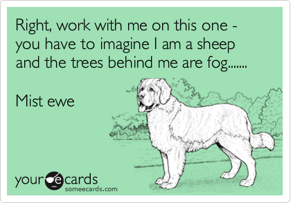 Right, work with me on this one - you have to imagine I am a sheep and the trees behind me are fog.......  Mist ewe