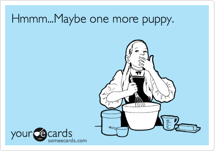Hmmm...Maybe one more puppy.