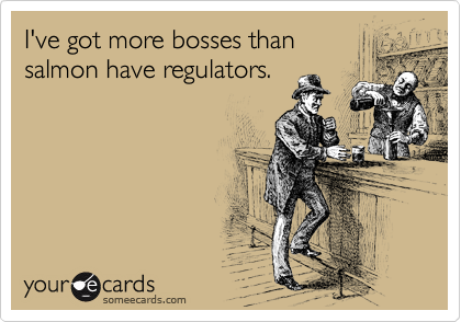 I've got more bosses than salmon have regulators.