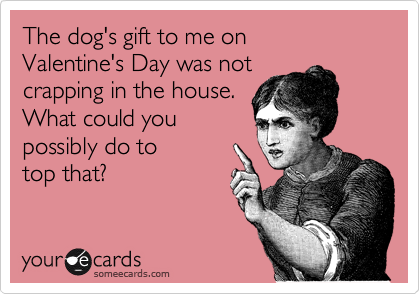 The dog's gift to me on  Valentine's Day was not crapping in the house. What could you possibly do to top that?