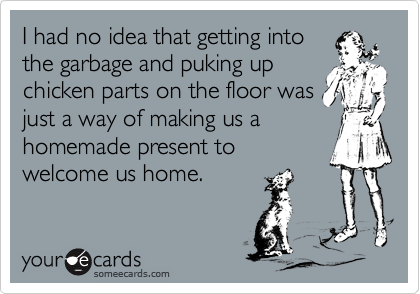 I had no idea that getting into the garbage and puking up chicken parts on the floor was just a way of making us a homemade present to welcome us home.
