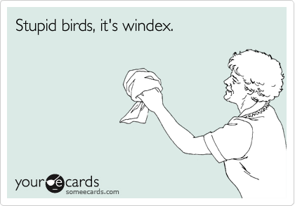 Stupid birds, it's windex.