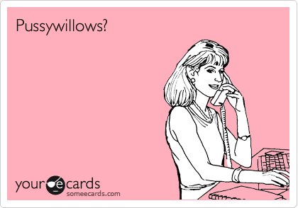 Pussywillows?