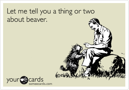 Let me tell you a thing or two about beaver.
