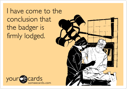 I have come to the conclusion that the badger is firmly lodged.