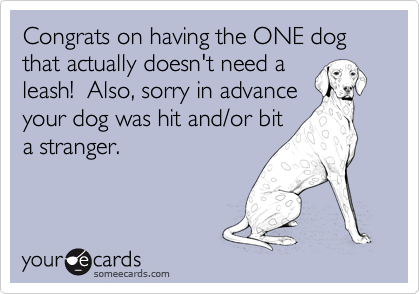 Congrats on having the ONE dog that actually doesn't need a leash!  Also, sorry in advance your dog was hit and/or bit a stranger.