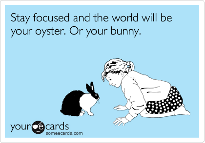 Stay focused and the world will be your oyster. Or your bunny.