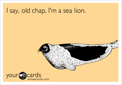I say, old chap, I'm a sea lion.