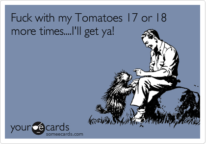 Fuck with my Tomatoes 17 or 18 more times....I'll get ya!