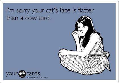 I'm sorry your cat's face is flatter than a cow turd.