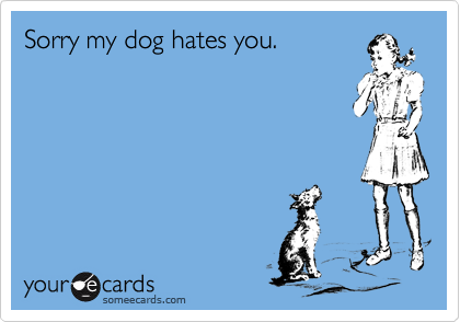 Sorry my dog hates you.