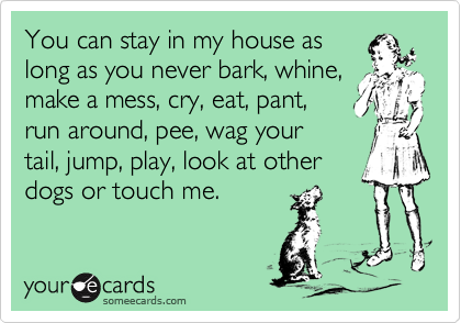 You can stay in my house as long as you never bark, whine, make a mess, cry, eat, pant, run around, pee, wag your tail, jump, play, look at other dogs or touch me.
