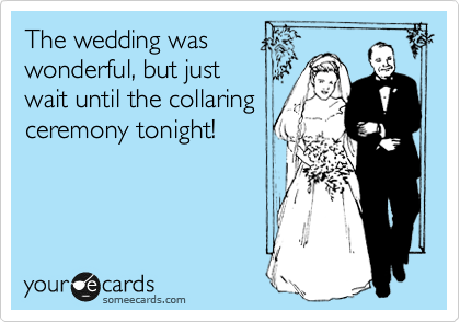The wedding was wonderful, but just wait until the collaring ceremony tonight!