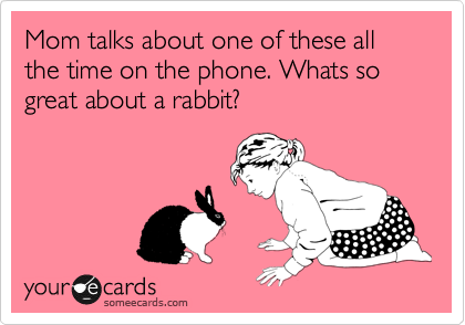 Mom talks about one of these all the time on the phone. Whats so great about a rabbit?
