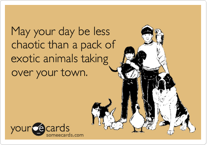 May your day be less chaotic than a pack of exotic animals taking over your town.