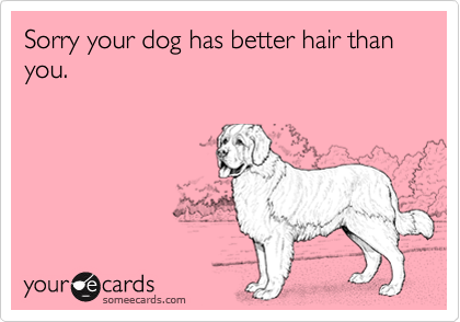 Sorry your dog has better hair than you.