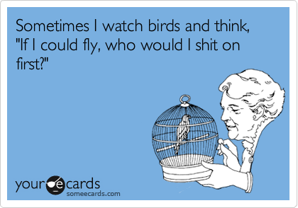 """Sometimes I watch birds and think, """"If I could fly, who would I shit on first?"""""""
