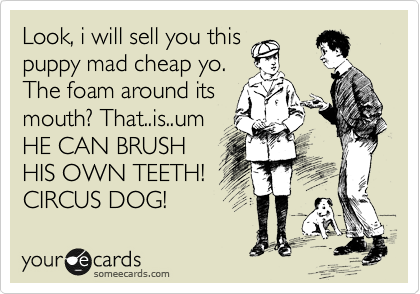 Look, i will sell you this puppy mad cheap yo. The foam around its mouth? That..is..um HE CAN BRUSH HIS OWN TEETH! CIRCUS DOG!