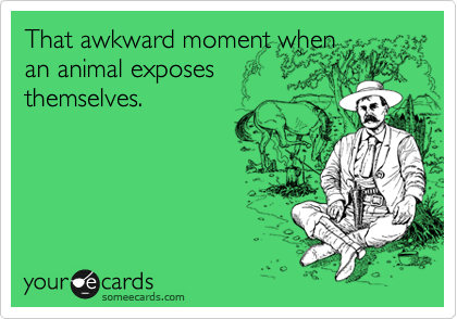 That awkward moment when an animal exposes themselves.