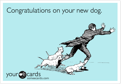 Congratulations on your new dog.