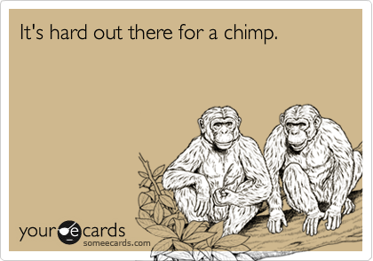 It's hard out there for a chimp.