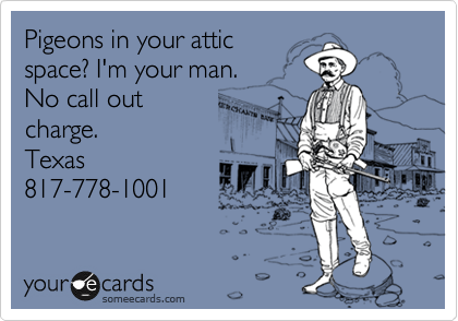 Pigeons in your attic space? I'm your man. No call out charge. Texas 817-778-1001