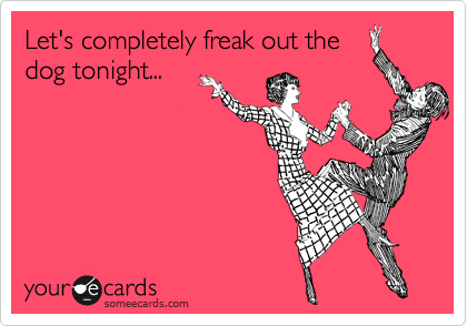 Let's completely freak out the dog tonight...