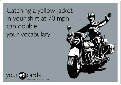 Catching a yellow jacket  in your shirt at 70 mph can double your vocabulary.