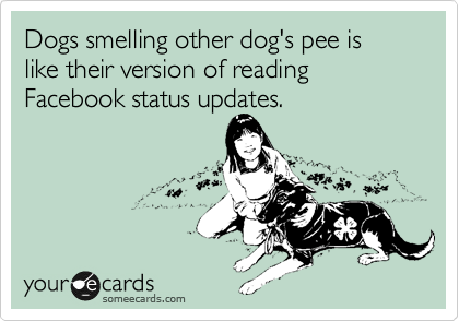 Dogs smelling other dog's pee is like their version of reading Facebook status updates.