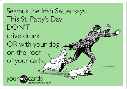 Seamus the Irish Setter says: This St. Patty's Day DON'T drive drunk OR with your dog on the roof of your car!