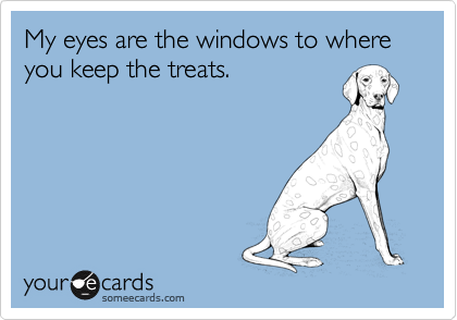 My eyes are the windows to where you keep the treats.