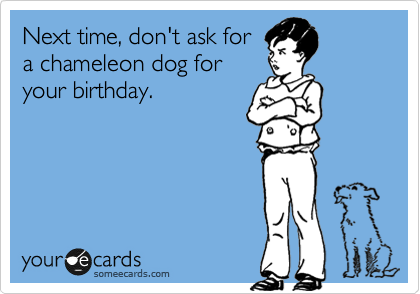 Next time, don't ask for a chameleon dog for your birthday.