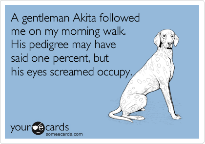 A gentleman Akita followed  me on my morning walk.  His pedigree may have  said one percent, but his eyes screamed occupy.