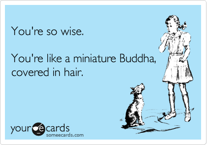 You're so wise.  You're like a miniature Buddha, covered in hair.