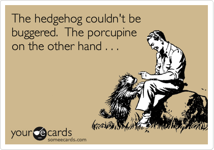 The hedgehog couldn't be buggered.  The porcupine on the other hand . . .
