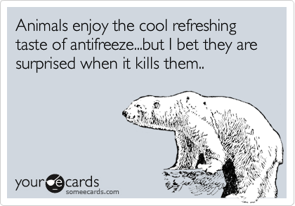 Animals enjoy the cool refreshing taste of antifreeze...but I bet they are surprised when it kills them..