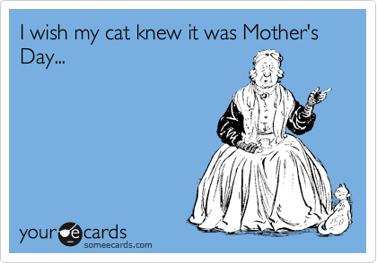 I wish my cat knew it was Mother's Day...