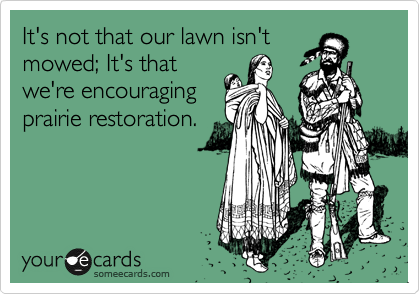 It's not that our lawn isn't mowed; It's that we're encouraging prairie restoration.
