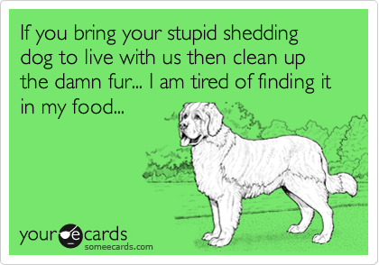 If you bring your stupid shedding dog to live with us then clean up the damn fur... I am tired of finding it in my food...