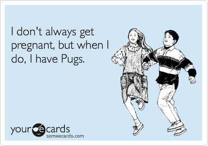 I don't always get pregnant, but when I do, I have Pugs.