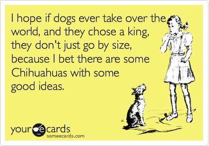 I hope if dogs ever take over the world, and they chose a king, they don't just go by size, because I bet there are some Chihuahuas with some  good ideas.