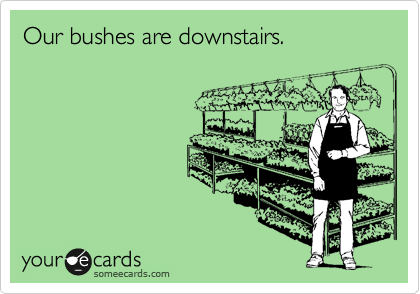 Our bushes are downstairs.