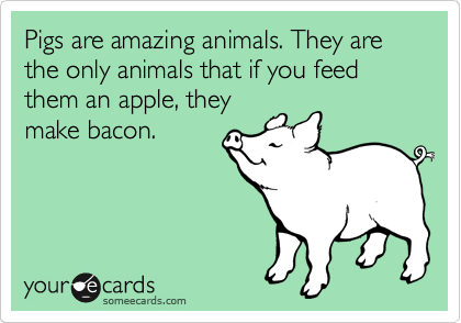 Pigs are amazing animals. They are the only animals that if you feed them an apple, they make bacon.