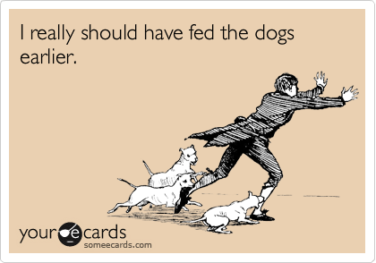 I really should have fed the dogs earlier.