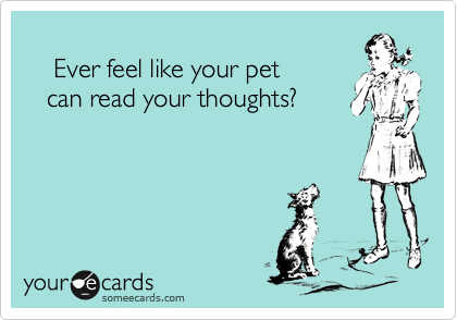 Ever feel like your pet     can read your thoughts?